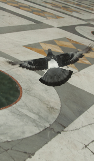 Contact_Us_Pigeon