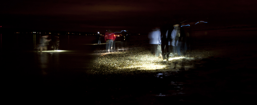 Tidepooling_at_Night_Golden_Gardens_7501