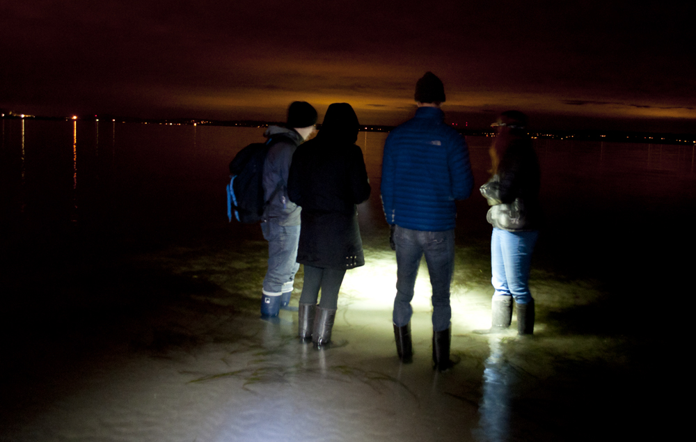 Tidepooling_at_Night_Golden_Gardens_7521