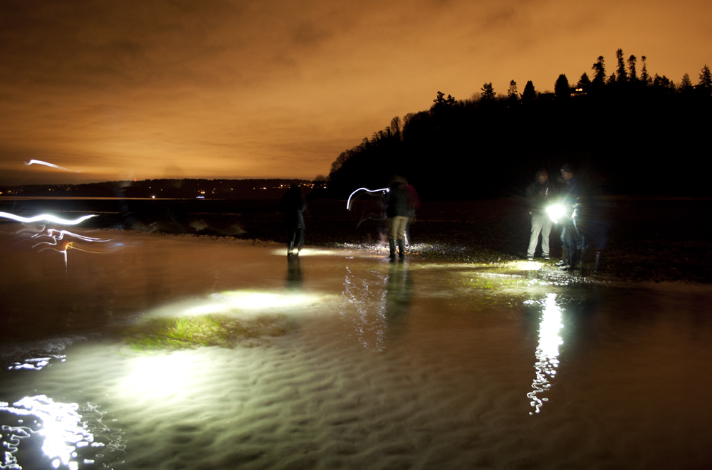 Tidepooling_at_Night_Golden_Gardens_7538